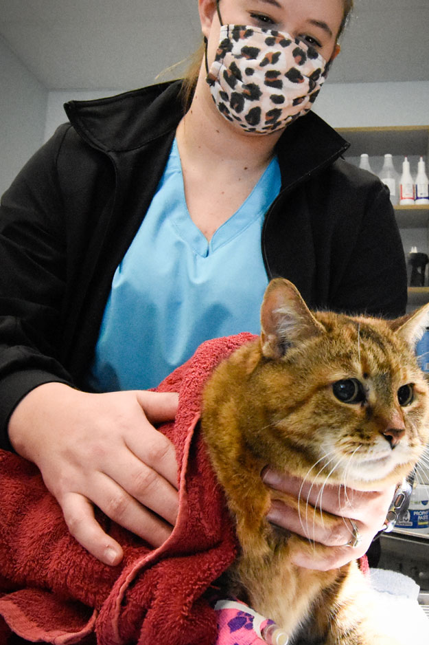 Biscoe_Animal_Hospital_Biscoe_NC_Cat_Recovery